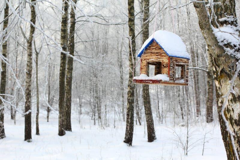 鸟饲养者在冬天森林里 免版税库存图片