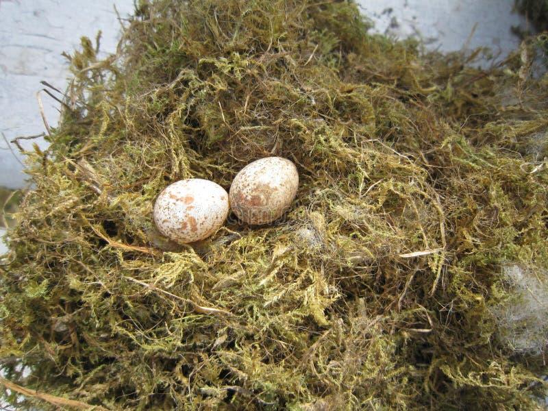 鸟鸡蛋 库存照片