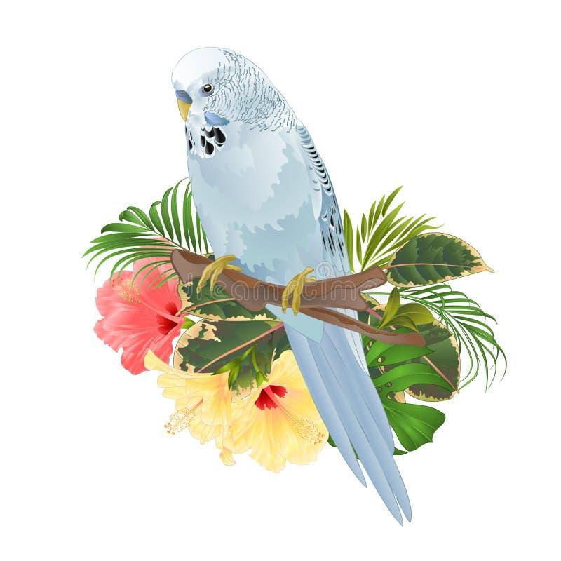 鸟鹦哥,家庭宠物,在分支花束的蓝色宠物长尾小鹦鹉与热带花木槿,棕榈,在白色bac的爱树木的人 向量例证