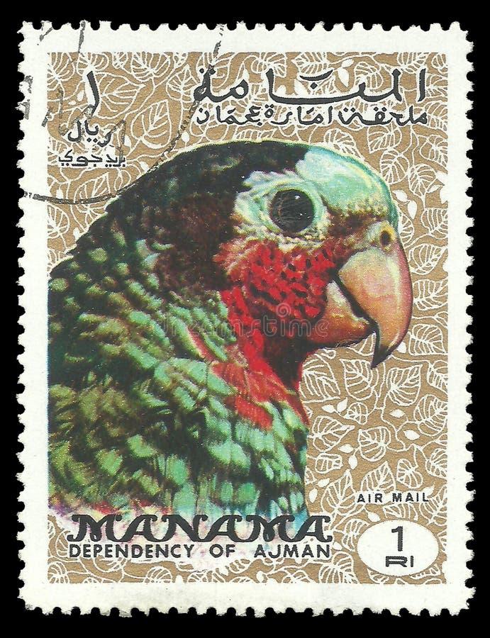 鸟,古巴人亚马逊 免版税图库摄影
