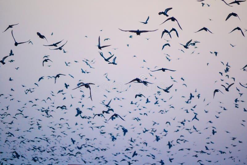 鸟,天空剪影 免版税库存照片