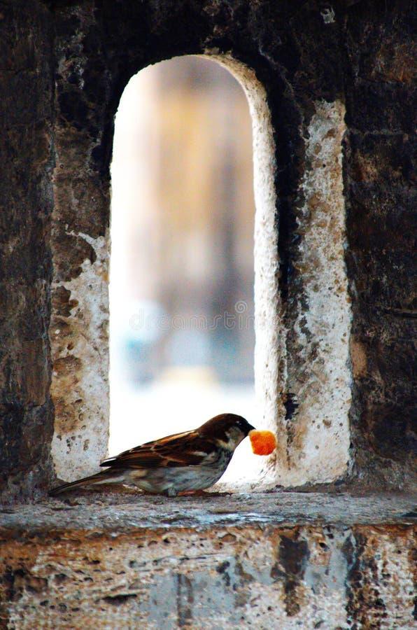 鸟,Fortrrss,Castel Sant& x27;安吉洛 罗马,梵蒂冈,意大利 库存照片