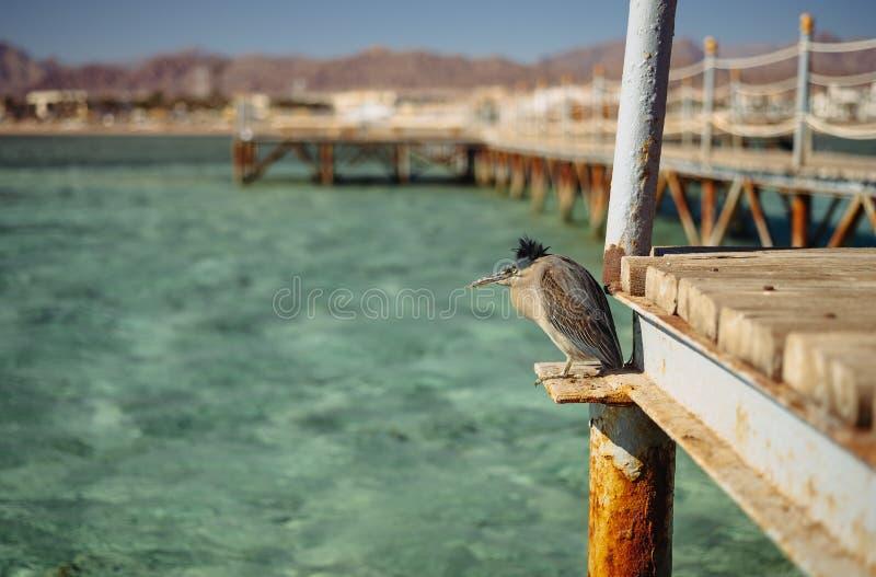 鸟从在一个木码头的强风掩藏在海 免版税库存照片