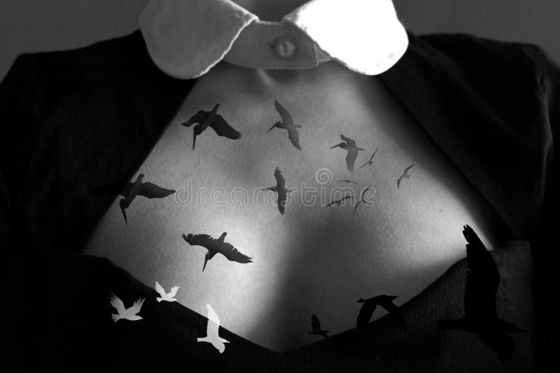 鸟从心脏飞行 库存图片