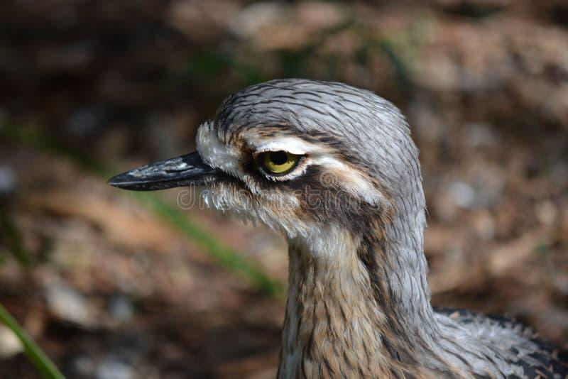 鸟画象 免版税库存图片