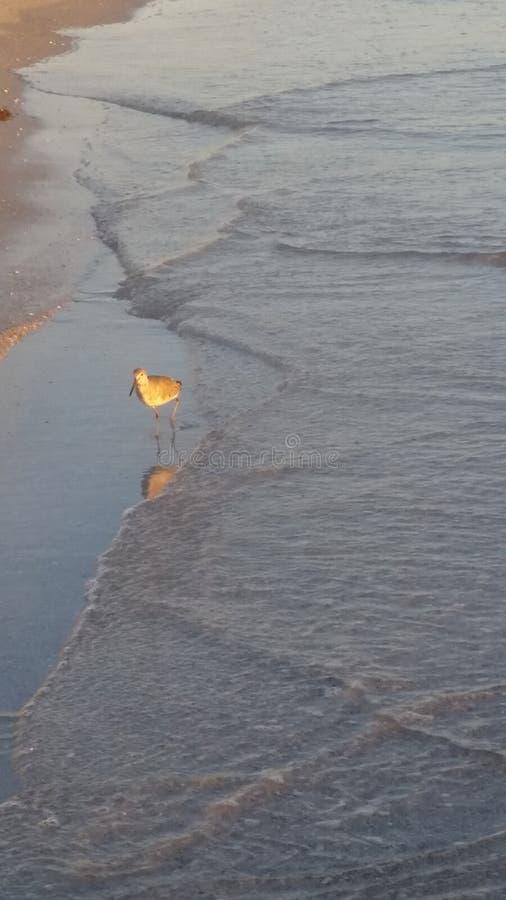 水鸟 免版税库存图片