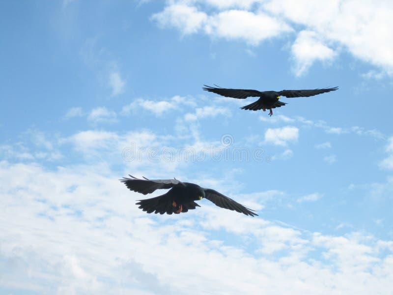 鸟3 库存图片