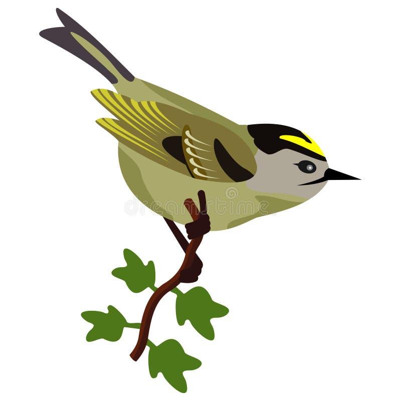 鸟goldcrest唱歌 向量例证