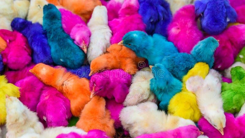 鸡上色了婴孩 一个小组滑稽,五颜六色的复活节小鸡 库存照片