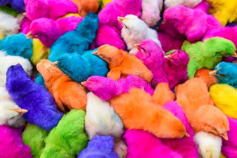 鸡上色了婴孩 一个小组滑稽,五颜六色的复活节小鸡 免版税库存照片