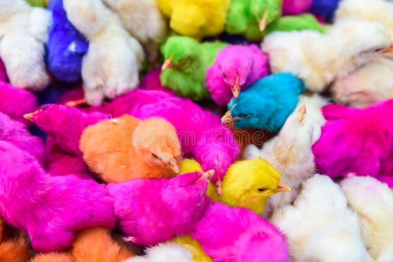 鸡上色了婴孩 一个小组滑稽,五颜六色的复活节小鸡 免版税库存图片