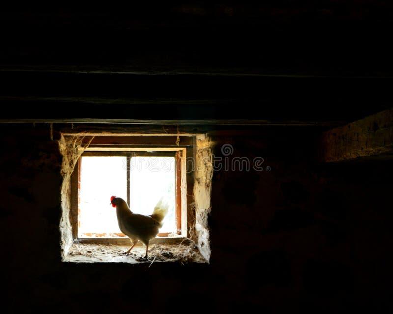 鸡在旧世界威斯康辛的一个窗口里 免版税库存照片