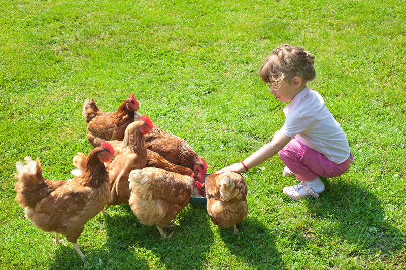 鸡女孩 免版税库存图片