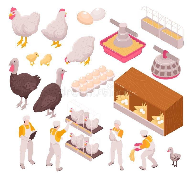 鸡生产象集合 库存例证