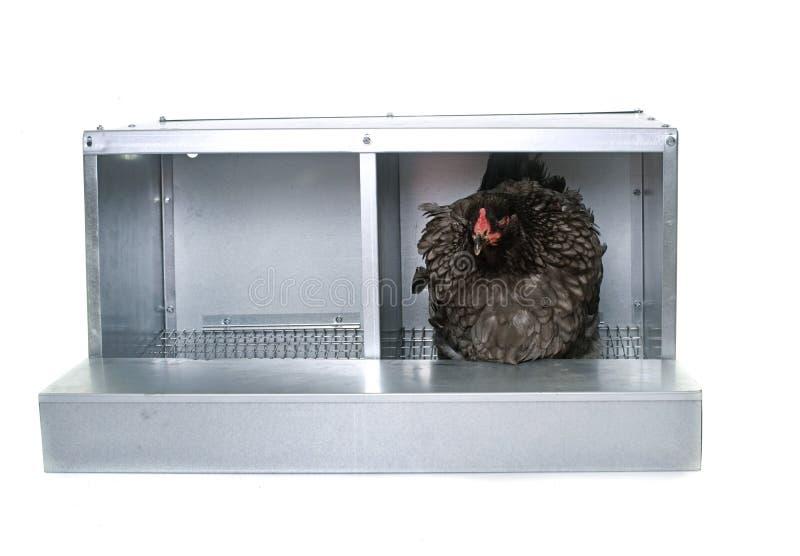 鸡的金属巢箱 库存图片