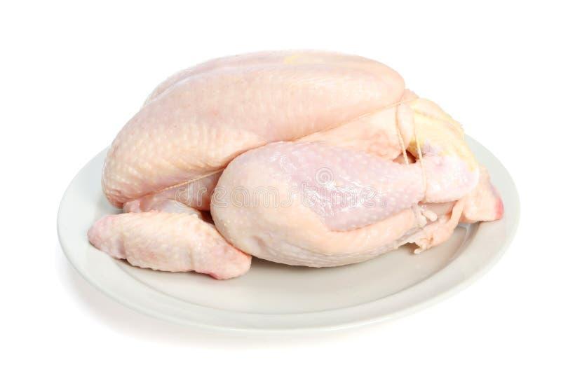 鸡联合原始 免版税图库摄影