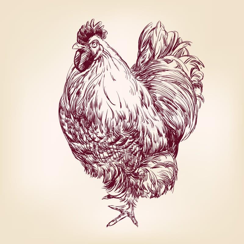鸡葡萄酒手拉的传染媒介例证 向量例证