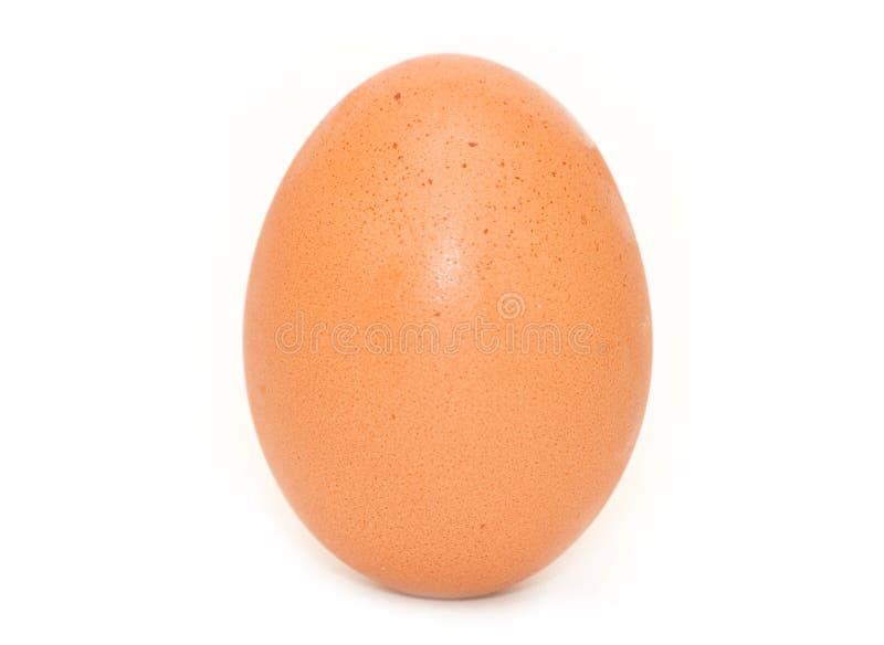 鸡蛋一 免版税库存图片