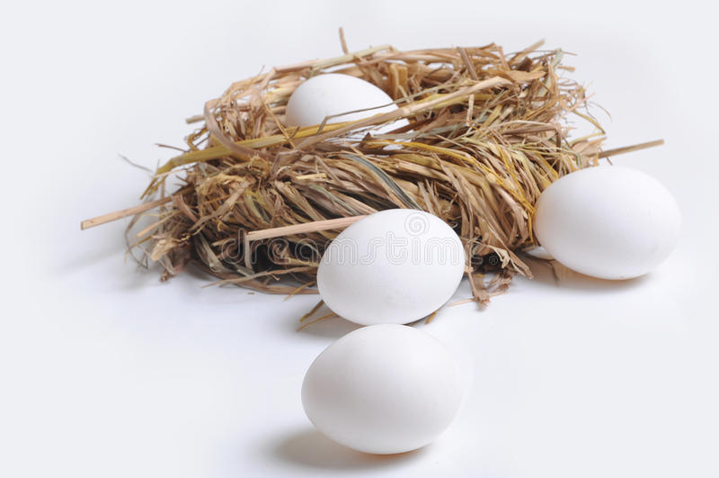 鸡蛋和巢 库存图片