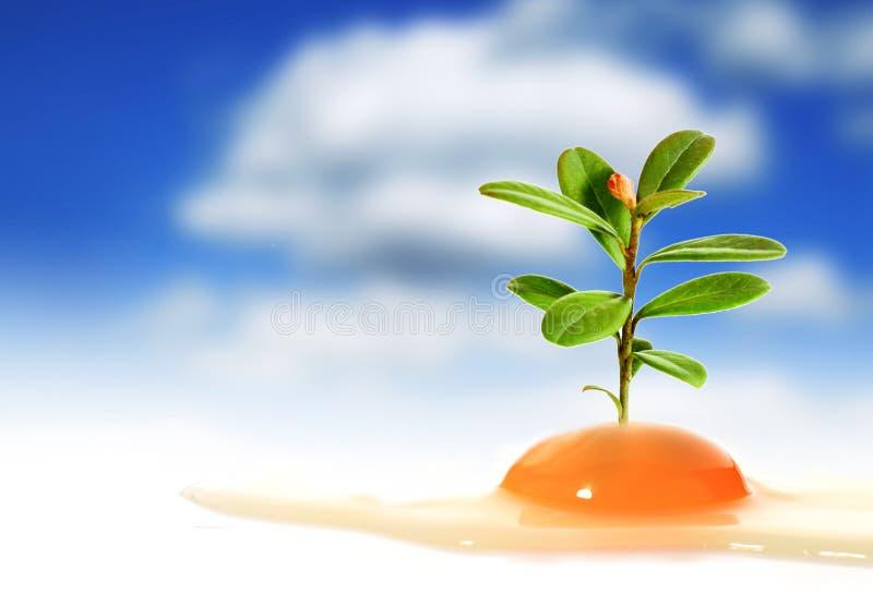 鸡蛋和植物。 图库摄影
