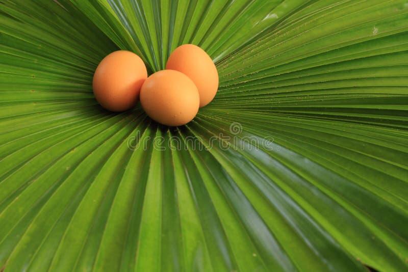鸡蛋和绿色叶子 库存图片