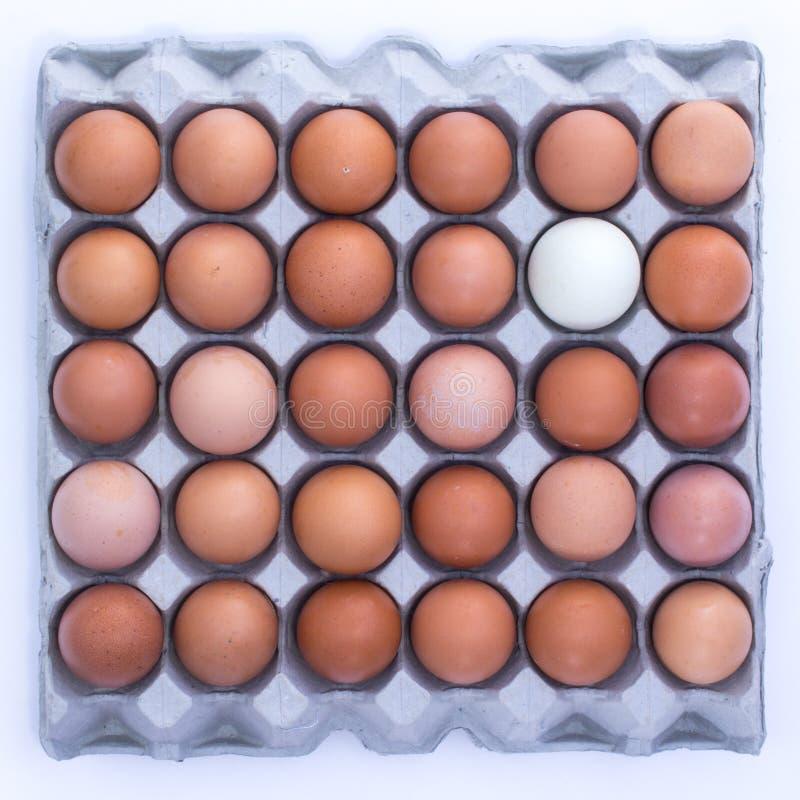 鸡蛋和蛋盘区 免版税库存图片