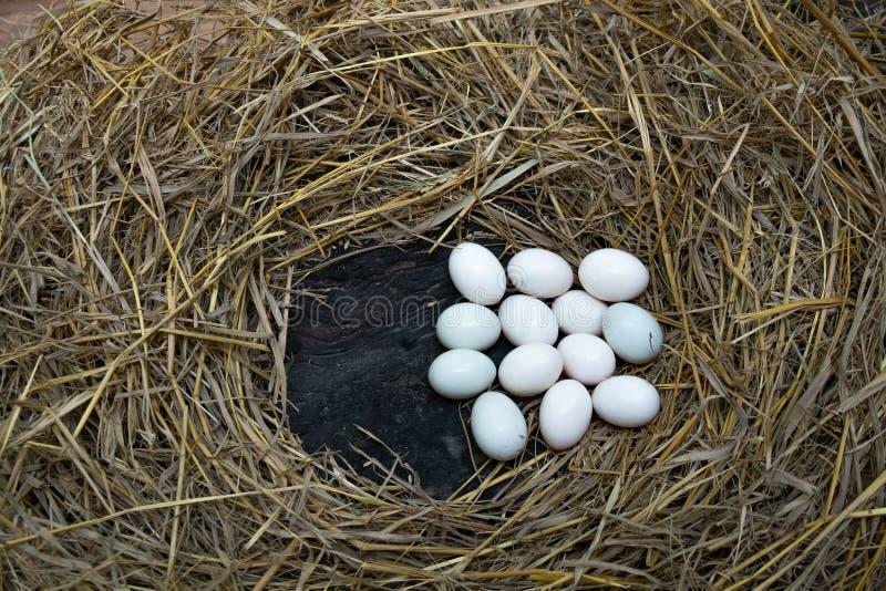 鸡蛋在秸杆,白色鸭子鸡蛋投入了 免版税库存照片
