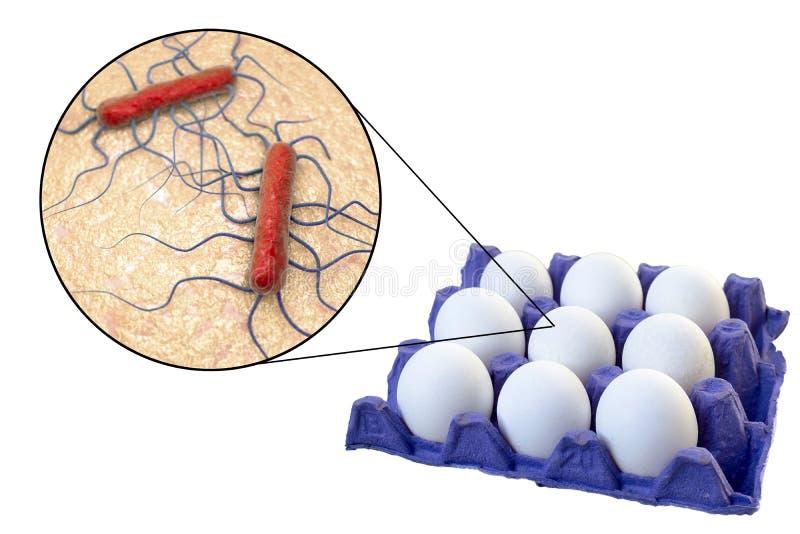 鸡蛋的污秽与李斯特氏杆菌monocytogenes细菌的,利斯特氏菌病传输的医疗概念  免版税图库摄影