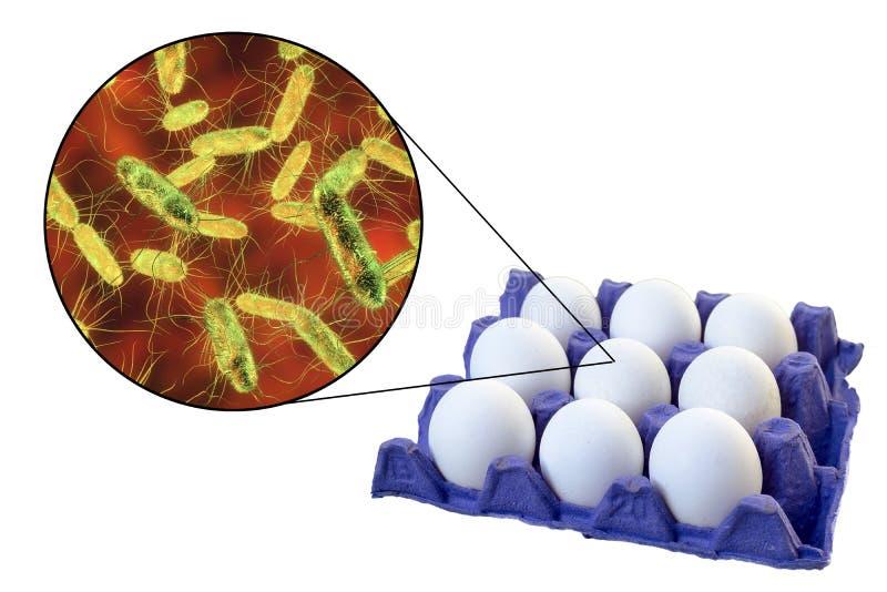 鸡蛋的污秽与沙门氏菌细菌的,沙门氏杆菌病传输的医疗概念  免版税图库摄影