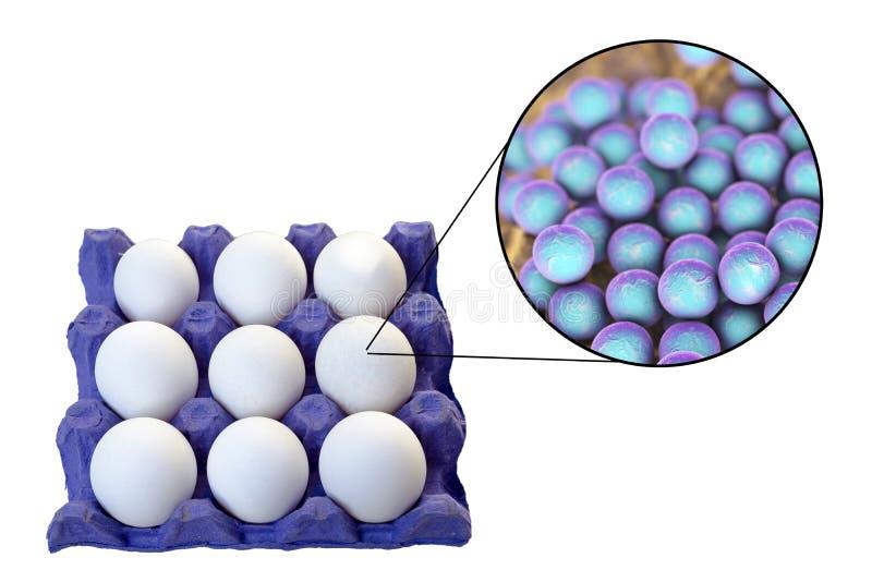 鸡蛋的污秽与葡萄状球菌-奥里斯细菌的,葡萄球菌的食物传输的医疗概念  免版税库存图片