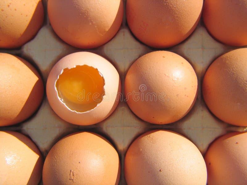 Download 鸡蛋 库存图片. 图片 包括有 煎蛋卷, 鸡蛋, 脆弱, 家禽, 卵黄质, 食物, 新鲜, 嵌套, 双翼飞机 - 190677