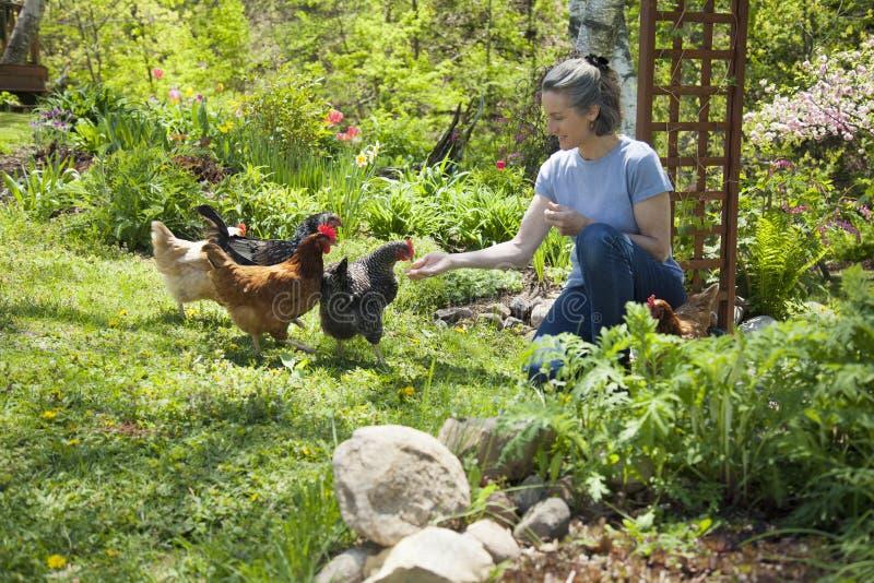 鸡释放培养范围 免版税库存照片