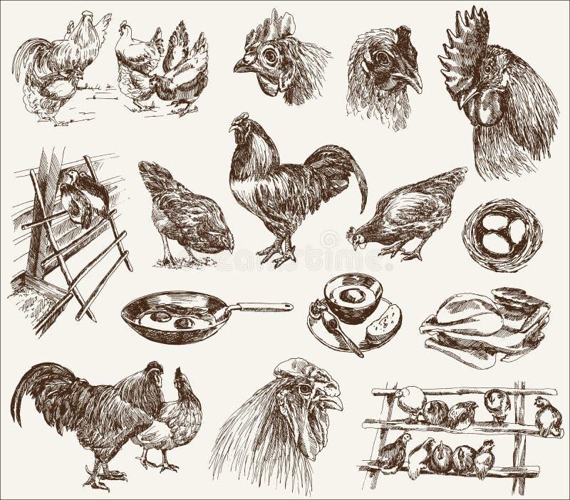 鸡饲养 向量例证