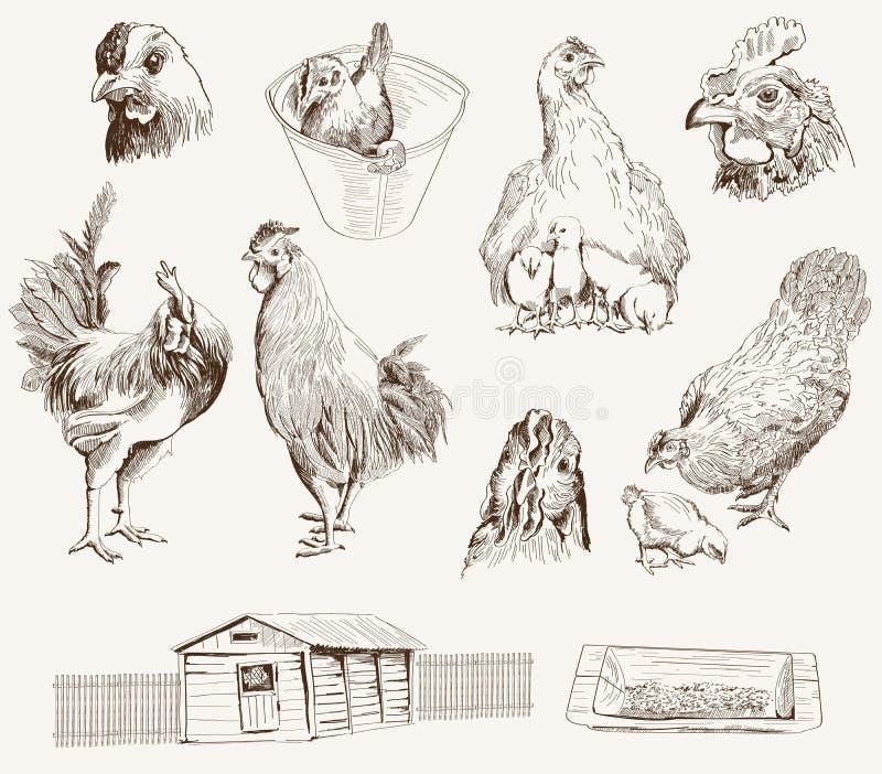 鸡饲养 皇族释放例证