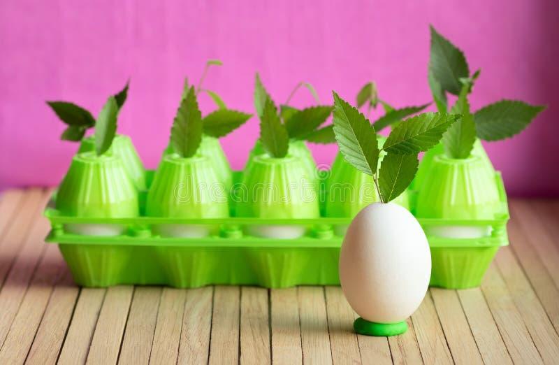 鸡鸡蛋和塑料封装鸡蛋的在桌上 年幼植物射击有通过发芽的绿色叶子的 免版税图库摄影