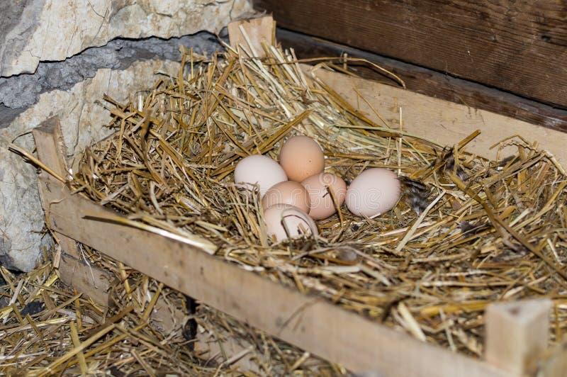 鸡鸡蛋的巢 免版税库存图片