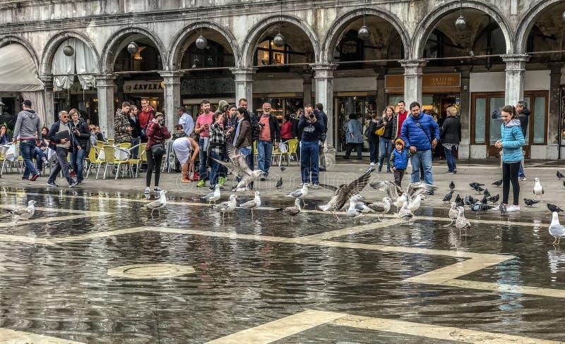 鸥和人们在被充斥的圣马可广场,威尼斯,意大利 库存照片
