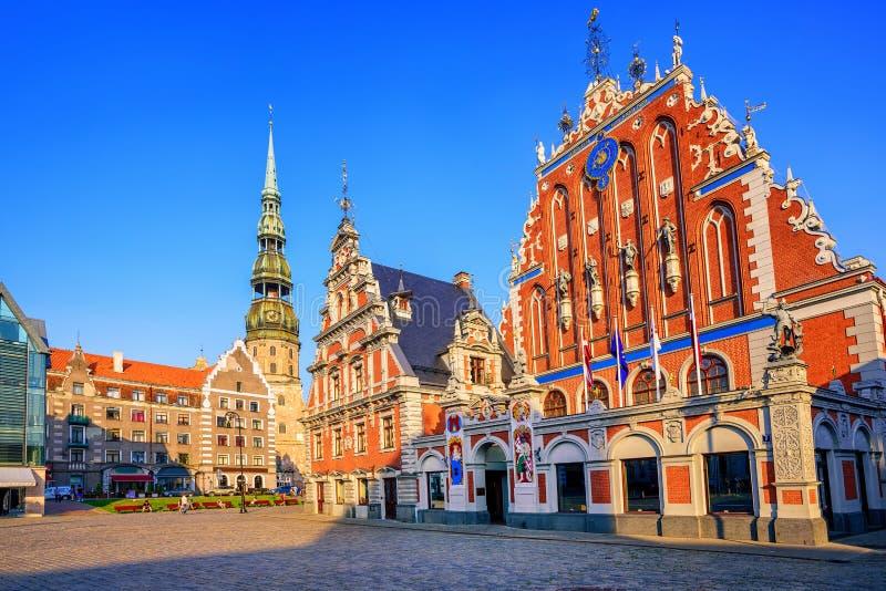 鸥安置在老镇里加,拉脱维亚 免版税库存照片