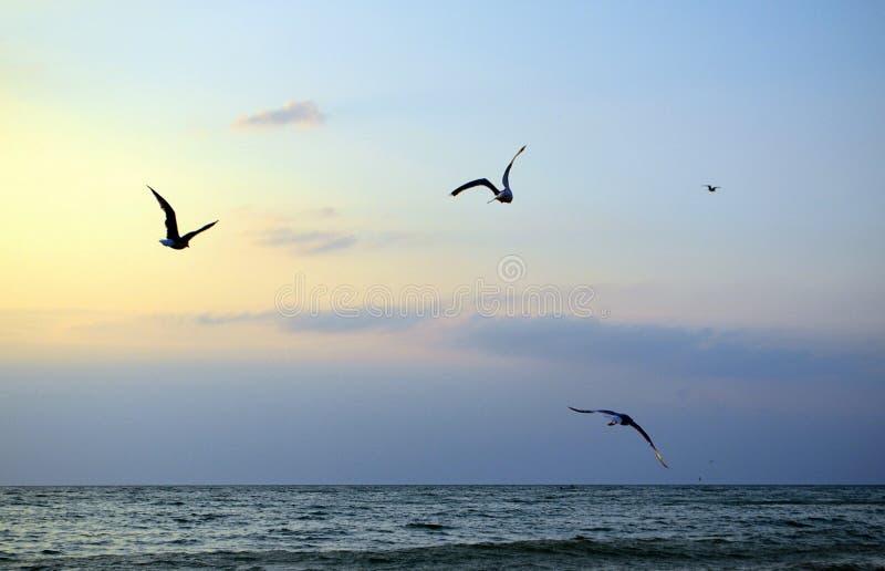 鸥海自然放松平静晚上天空鸟克里米亚夏天 免版税库存照片