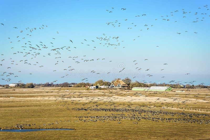 与房子和鸟的风景 免版税库存图片