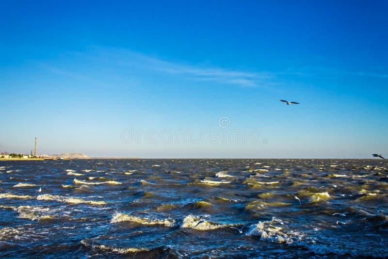 鸥鸬鹚飞行在汹涌的蓝色海,风暴背景 免版税库存照片