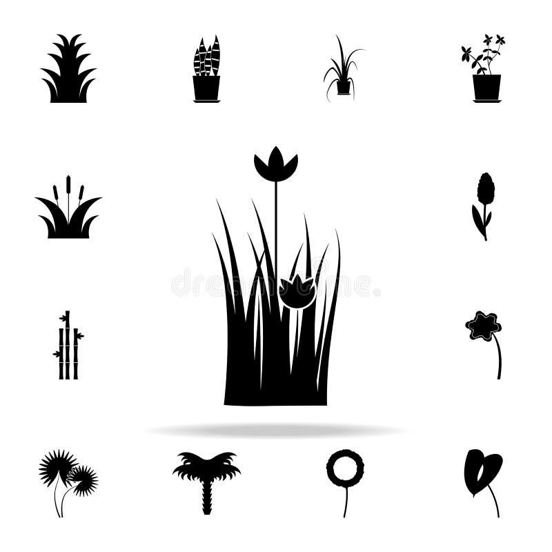 鸦片象 网和机动性的植物象全集 向量例证