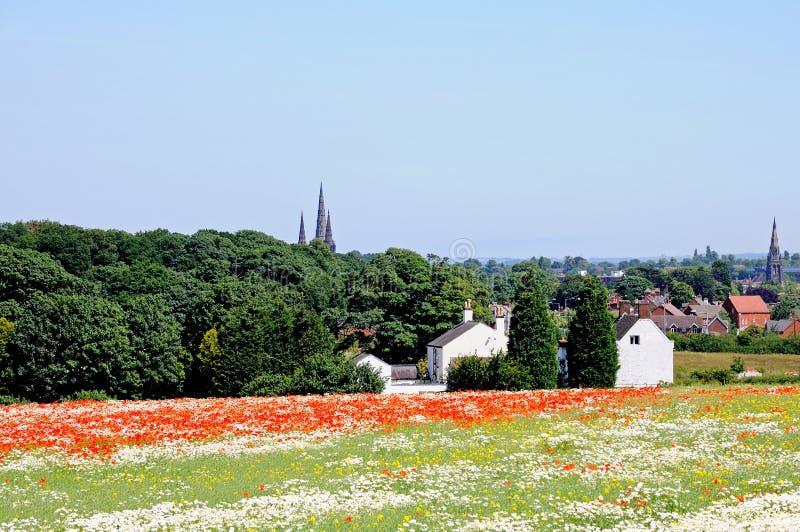 鸦片领域, Lichfield,英国。 库存图片