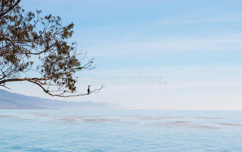 鸬鹚和加利福尼亚海景 库存照片