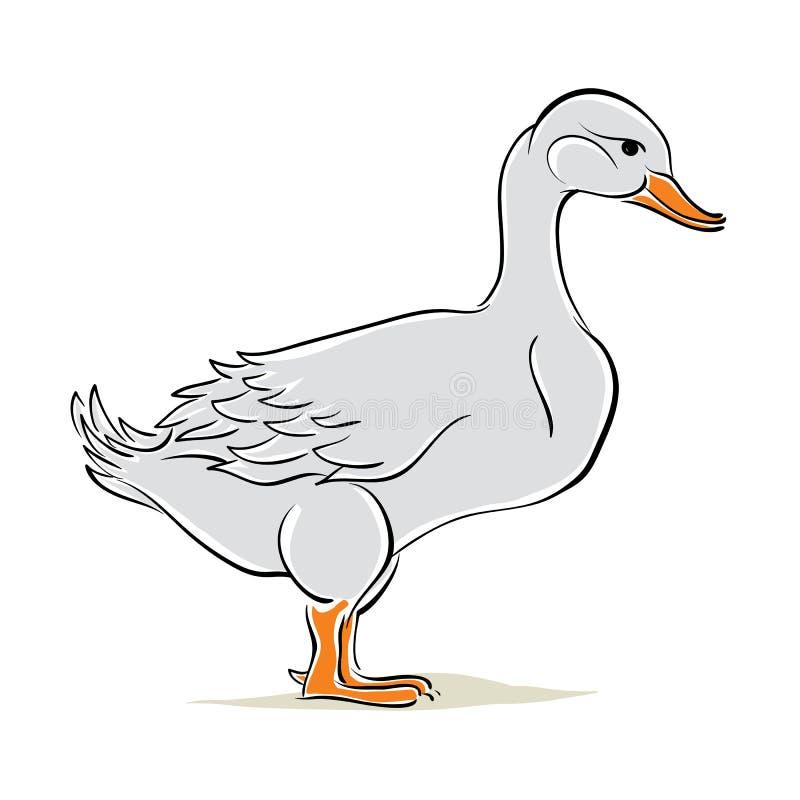 鸭子传染媒介例证 库存例证