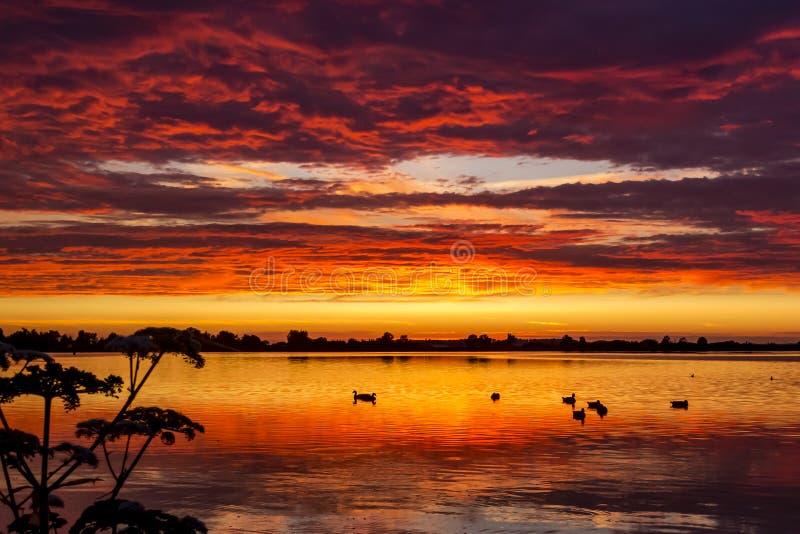 鸭子在使目炫日落在湖Zoetermeerse Plas,祖特尔梅尔,荷兰期间的水中 免版税图库摄影