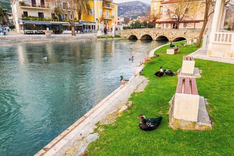 鸭子在城市在Solin,克罗地亚停放,享用由水 免版税图库摄影