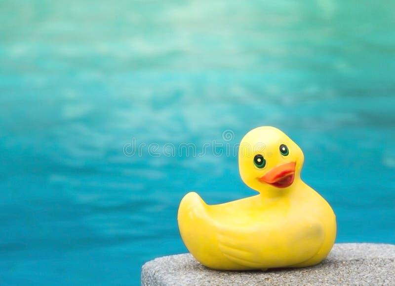 鸭子在游泳池的儿童玩具 免版税库存照片