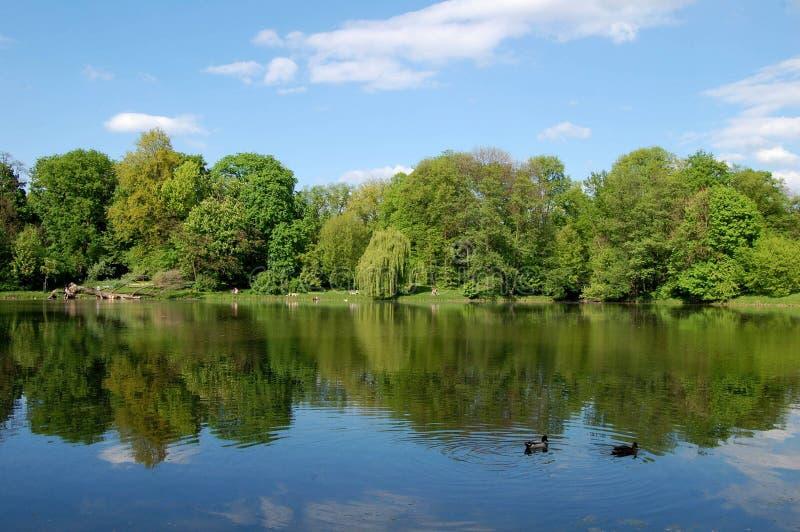鸭子有湖的一基于 免版税库存照片
