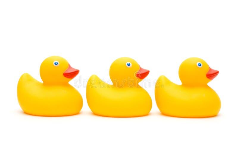 鸭子查出三 免版税库存图片